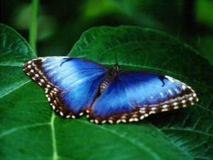 11butterfly