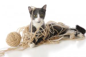 cat_yarn