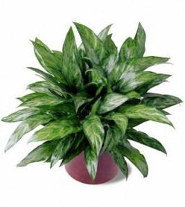 houseplants-detox-the-air