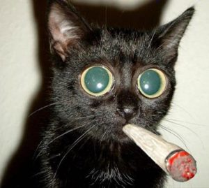 smoking-cat
