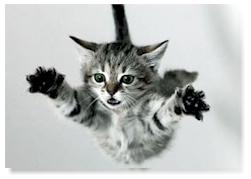 falling-cat